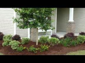 south carolina landscaping yard stuff pinterest