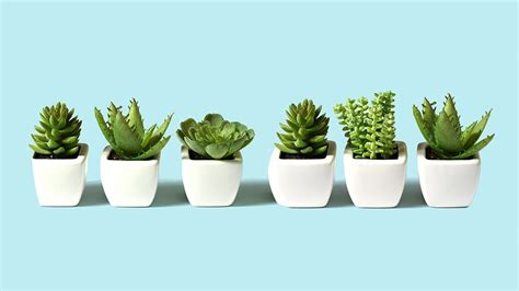 office plants how to be more productive office decorating ideas