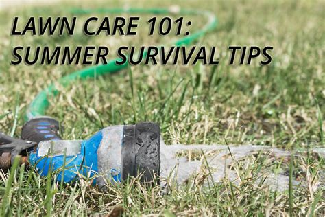 summer lawn care tips lawn survival tips for the summer heat georgia lawn care