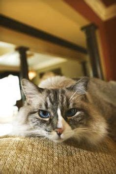 home remedies for dog peeing in house 1000 images about natural cat remedies on pinterest for cats home remedies and fleas