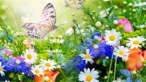 flowers flowers garden colorful bright butterfly