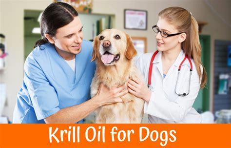 krill for dogs guide to krill for dogs us bones