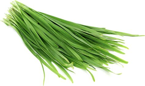 chive com garlic chives information recipes and facts