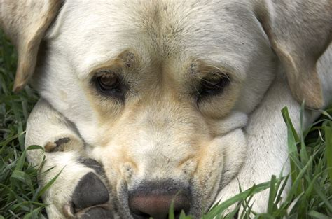 painkiller for dogs common causes of canna pet