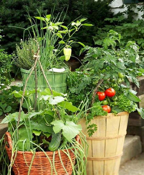 vegetable garden in pots growing vegetables in pots starting a container
