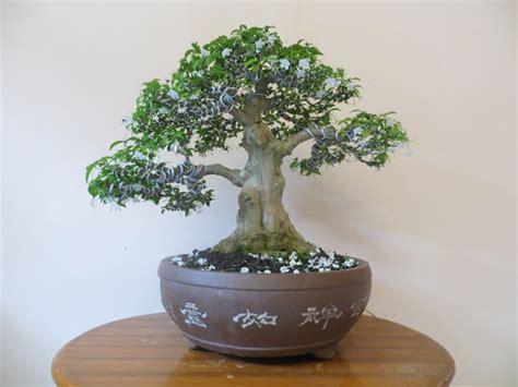 Anting Bunga Melati bonsai anting putri