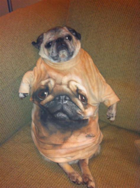 pug child meme buddy s xzibit meme quot yo we put a pug in yo pug so you can pug while you pug quot pugs