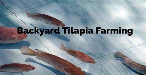 turn your backyard into a fish farm raise tilapia at