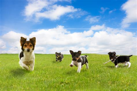 places where you can play with puppies vet pet tips