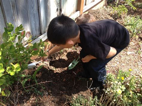 Blossom Valley Plumbing by Students Plant And Care For A Garden Fall Winter And