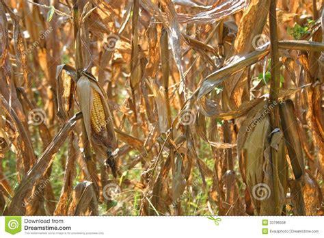 corn drying rack bcep2015 nl