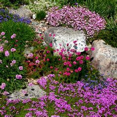 Dianthus Simulans гвоздика Rock Garden Mountain Rock Creek Gardens Silver