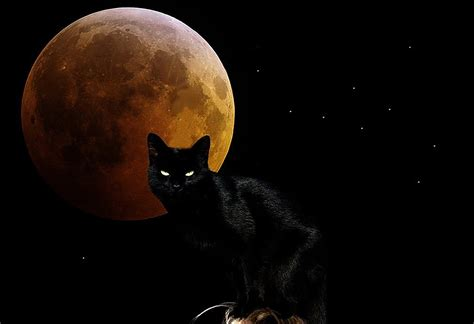 wallpaper chat black witchy moon cat wallpaper and background 1280x875 id