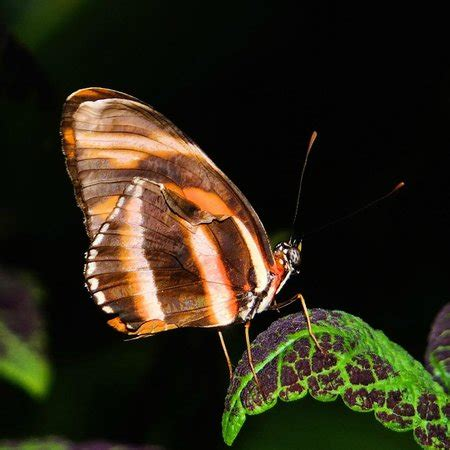sertoma butterfly house sertoma butterfly house picture of sertoma butterfly house marine cove sioux