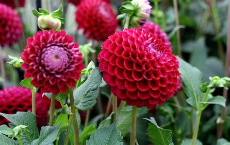 garden flowers and plants when you re garden needs an injection of colour growing
