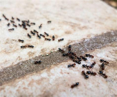 Die Besten 78 Ideen Zu Ameisen Im Haus Auf