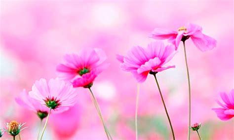 imagenes flores jpg im 225 genes de flores bonitas y hermosas con frases