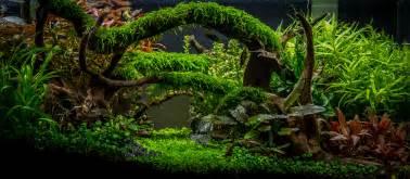 aquascaping planted tank planted aquarium gallery green leaf aquariums