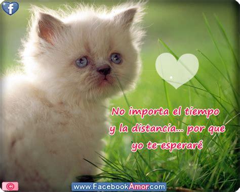 imagenes con frases bonitas de gatitos gatitos lindos con frases bonitas de amor para descargar