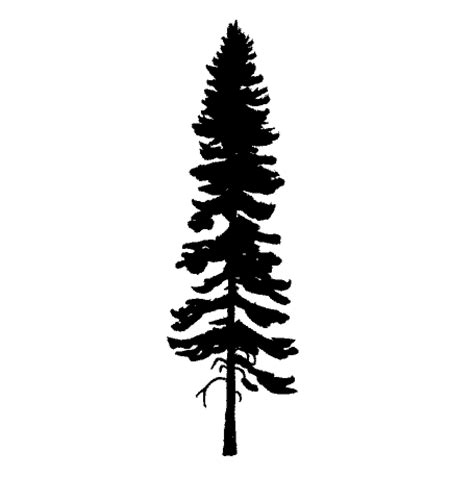 tall pine tree clipart