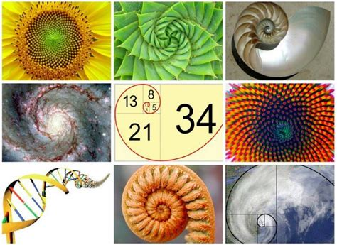 mathematical patterns in nature learn about the magic of fibonacci in nature the math of god