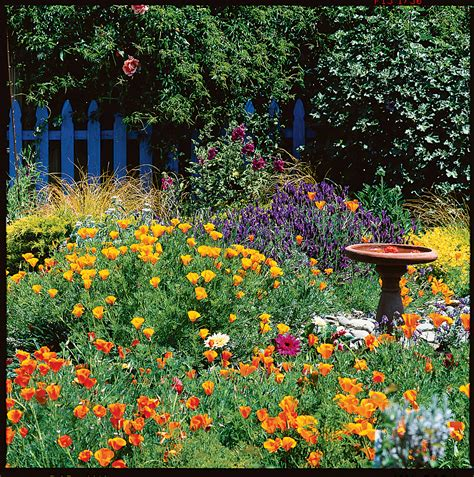 cottage garden how to grow a cottage garden sunset