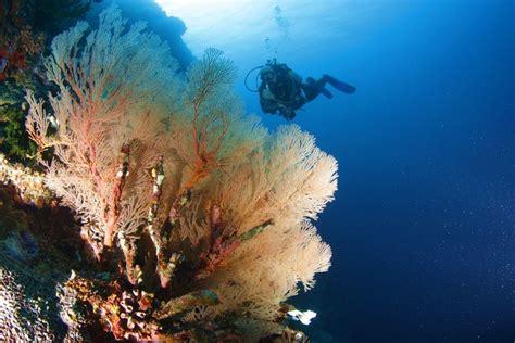 best dive spots moalboal dive spots savedra dive center