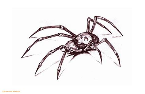 spider tattoo design tattoopilot spider designs tattoos