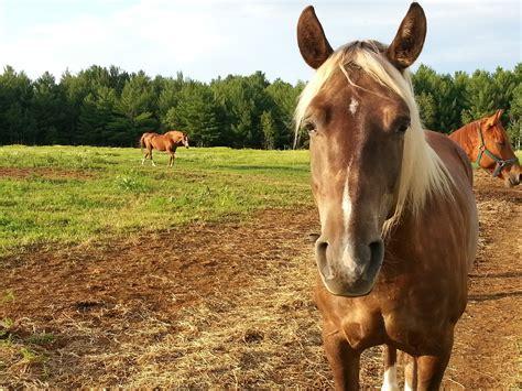 sad horse  stock photo public domain pictures