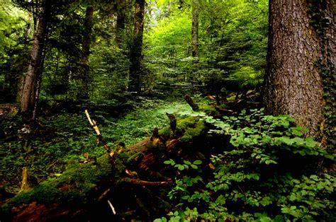 el bosque de morogoro un globo aerost 225 tico un dinosaurio un bosque la vida en cuentos