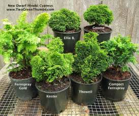 miniature indoor plants new miniature garden plants for indoor or outdoor the