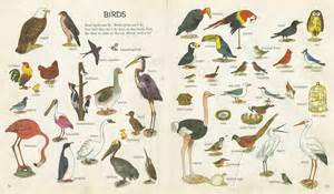 different bird species outdoor education africa