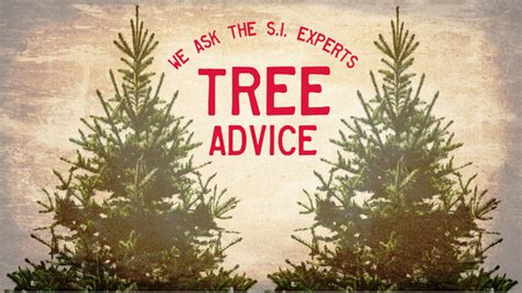 9 tips for picking the best christmas tree when is the