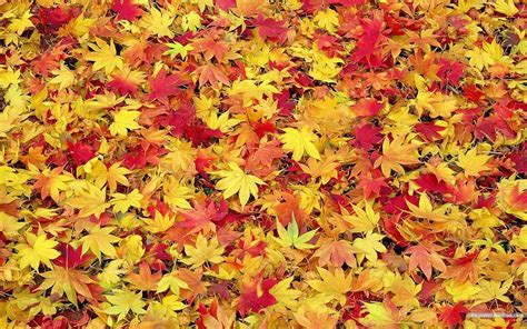 fall leaf backgrounds wallpaper cave