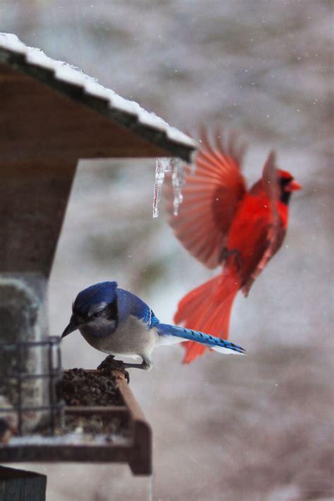 Backyard Birding Magazine by Winter Backyard Birding Basics Kentuckyangling News