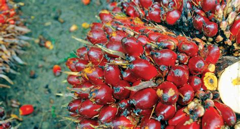 Minyak Goreng Industri by Berita Sawit Jual Minyak Goreng Sawit Pt Industri