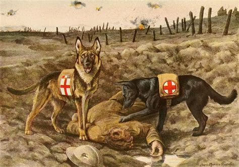 In High Cotton 50 resources for learning about war dogs and k 9 heroes