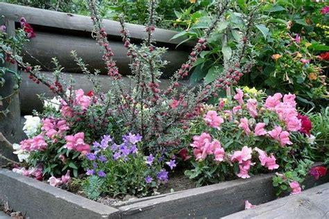 fiori per aiuole estive fiori da esterno fiori per cerimonie come scegliere i