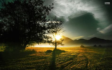 Nature De Sol by Trees Field Wallpapers