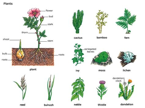 plant từ điển oxford advanced learner 8th