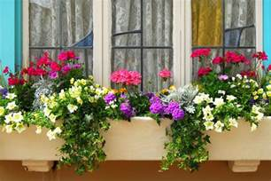 window box flower designs how to plant window boxes 10 simple tips reader s digest