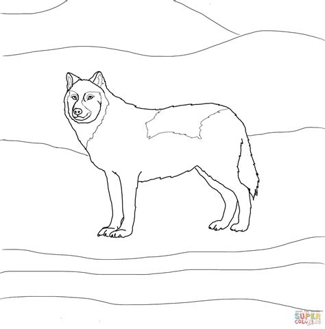 coloring page arctic wolf arctic wolf coloring pages