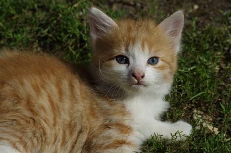 imagenes tiernas gatos imagenes amor facebook fotos imagenes tiernas y