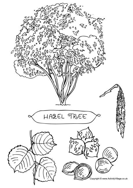 baby hazel coloring pages hazel tree colouring page