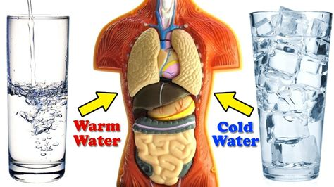 shower hot or cold no warm cold water vs warm water one of them is damaging to your