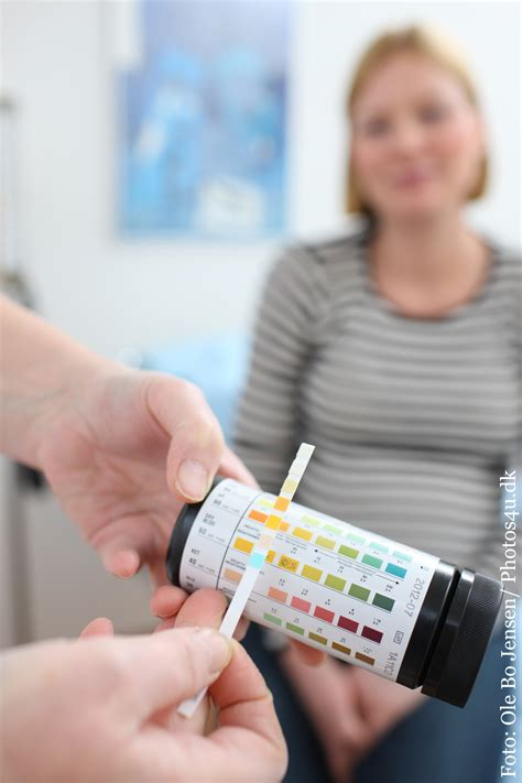 protein i urin gravid urinstix patienth 229 ndbogen p 229 sundhed dk