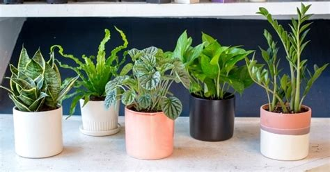love plants but no sunlight these plants can be your