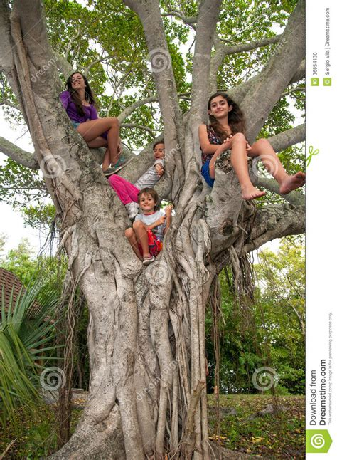 tree is up children up on a tree stock photo image 36854130
