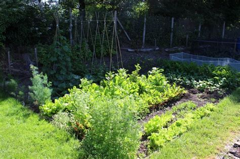 17 Vegetables That Grow Well In The Shade Shade Garden Vegetables