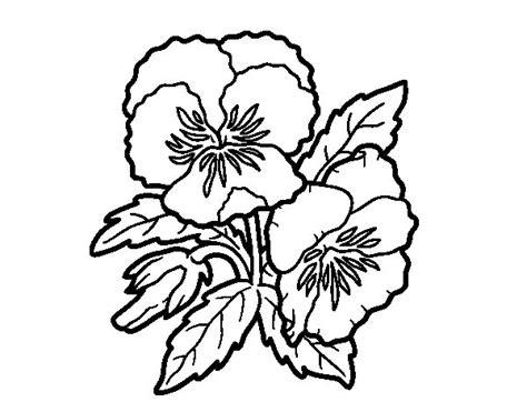 imagenes de flores sin pintar dibujo de flores de pensamiento para colorear dibujos net